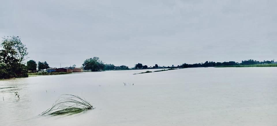 पर्सामा राती परेको पानीबाटधानको बिउ डुबान 