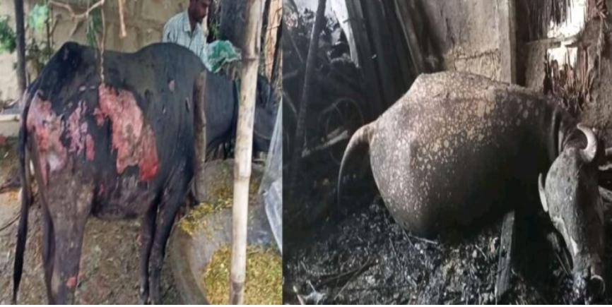 पकाहामैनपुर गाउँपालिकाको वडा नं २ सुर्जहामा आगलगि हुँदा लाखौको क्षति। ।